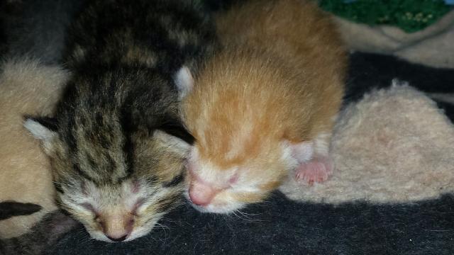 Portée de 9 chatons Photo_19