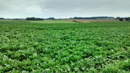 Waterzoï morne plat (photos du champ de bataille de Waterloo) Img_2023