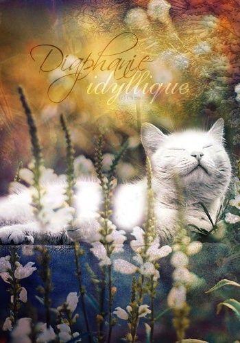 Reach the sky until the stars Cadeau13