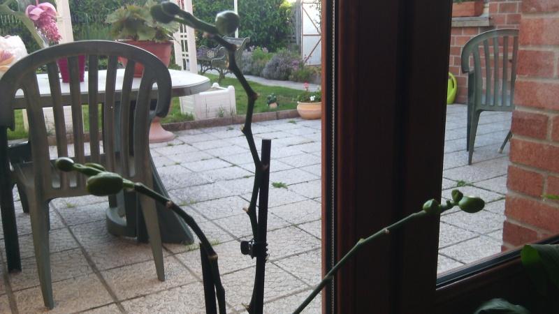 orchidée en détresse - Page 2 Img_2012