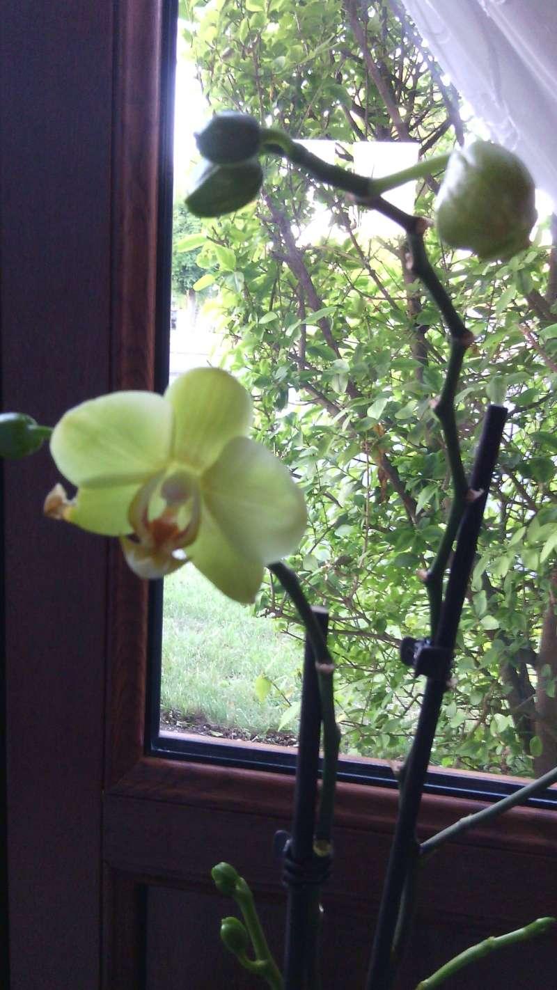 orchidée en détresse - Page 3 Img_2018