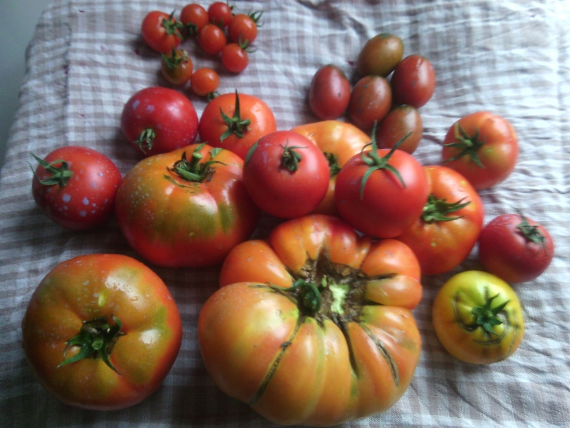 tunel pour mes tomates - Page 2 Img_2036