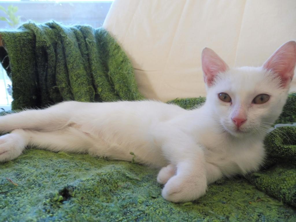 Miko, blanc mais pas sourd :p P1060216