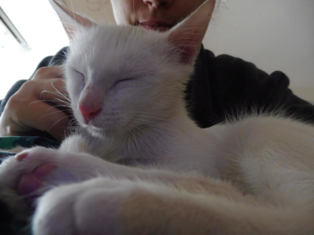 Miko, blanc mais pas sourd :p P1060411