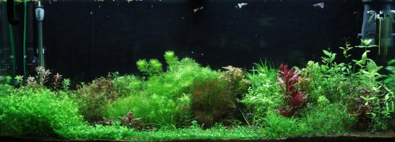 Ma passion pour les plantes aquatiques! - Page 5 Img_4811