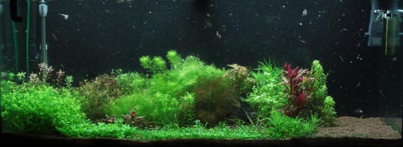 Ma passion pour les plantes aquatiques! - Page 5 Img_4812