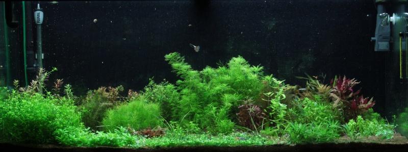 Ma passion pour les plantes aquatiques! - Page 5 Img_4813