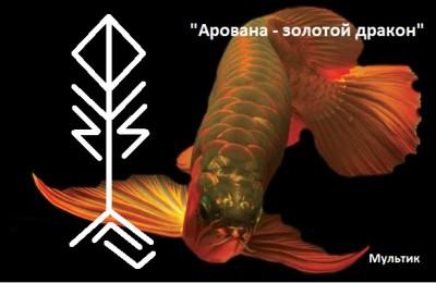АРОВАНА - ЗОЛОТОЙ ДРАКОН(МОГУЩЕСТВО,ФИН.БЛАГОПОЛУЧИЕ, УСПЕХ) 11961110