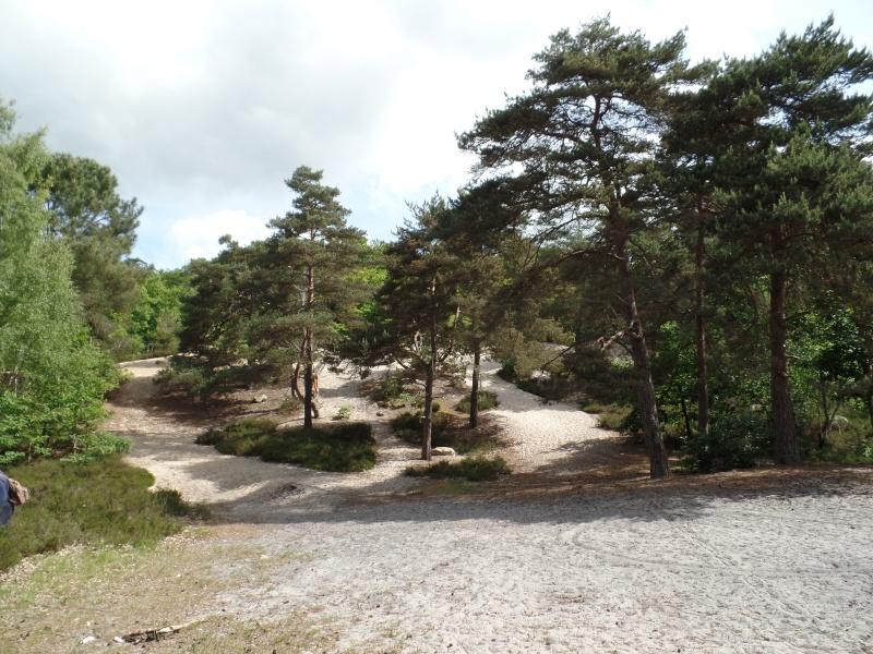 Forêt de Dourdan (91) Sam_2011