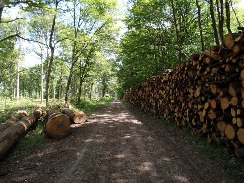 Forêt de Dourdan (91) Sam_2110