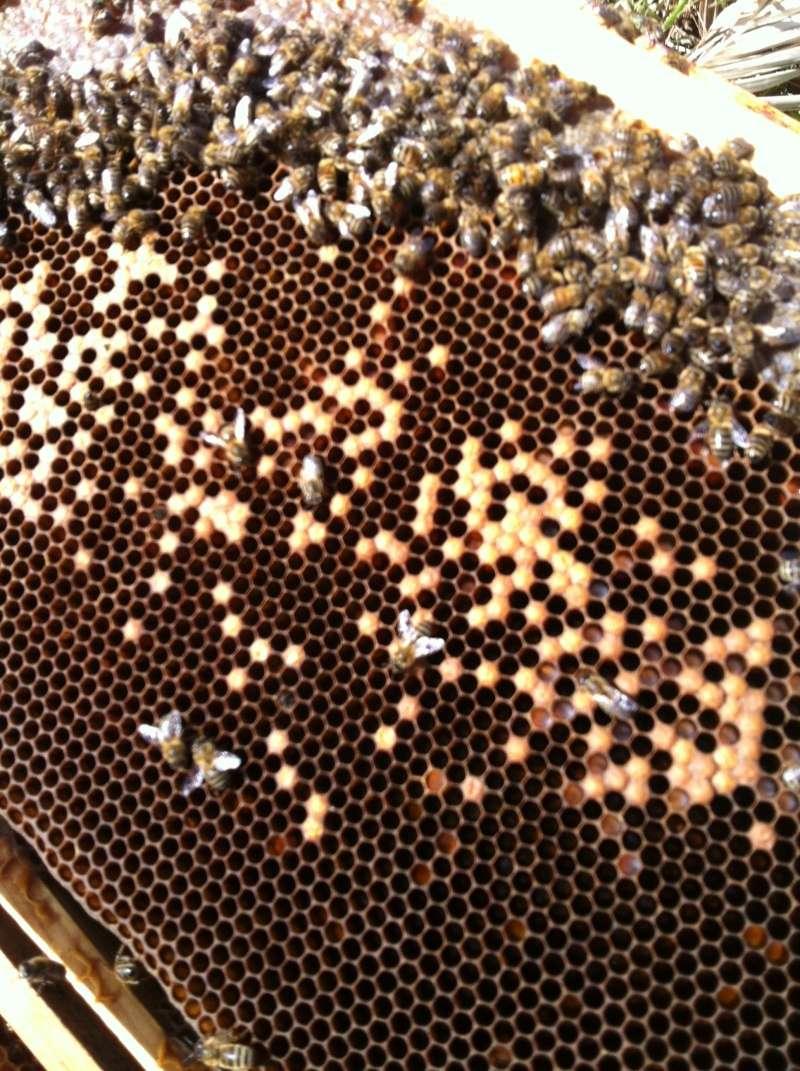 ruche blindée...couvain pourri Img_2711