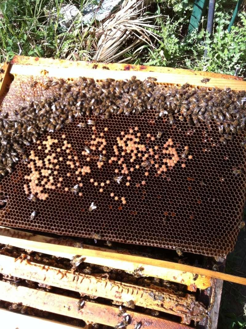 ruche blindée...couvain pourri Img_2712