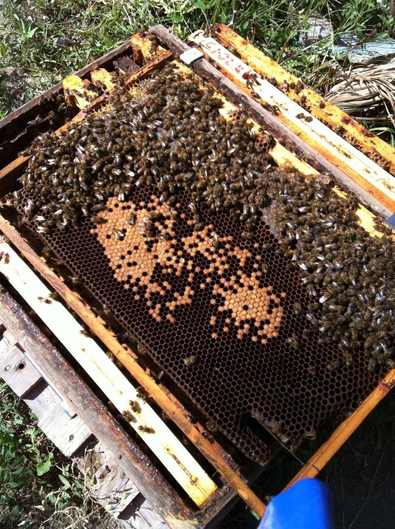 ruche blindée...couvain pourri Img_2713