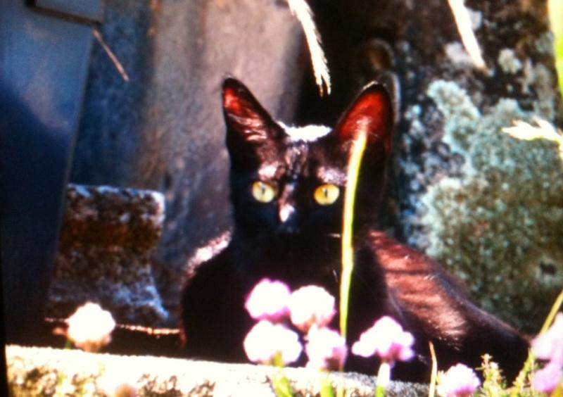 Jayane, femelle type européen noire, née le 07/12/2014, frais d'adoption libres Image10