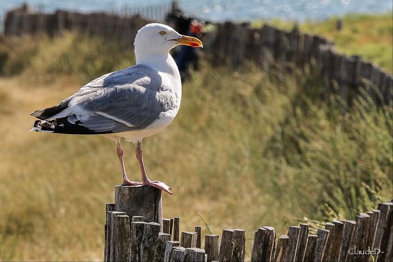 Animaux, oiseaux... etc. tout simplement ! - Page 23 Goeila10