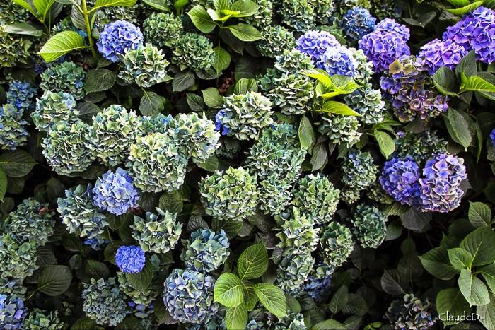 Fleurs ... tout simplement - Page 10 Horten10