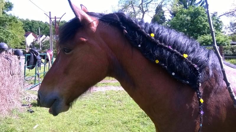 CONCOURS PHOTOS : Le cheval toiletté Wp_20113