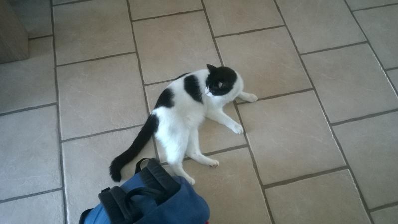 Janice,chaton femelle née le 20 mars adoptée - Page 2 Wp_20111