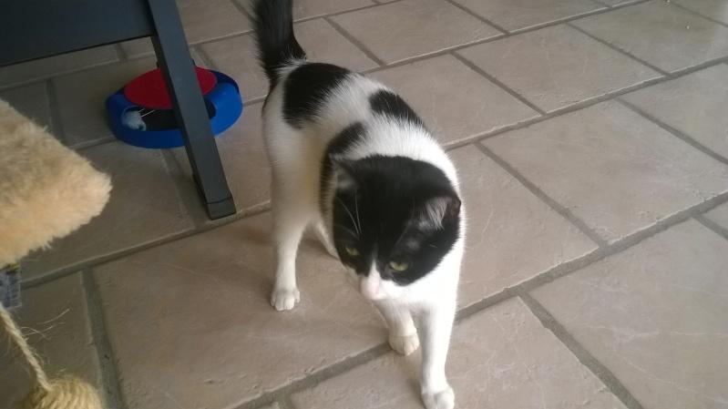 Janice,chaton femelle née le 20 mars adoptée - Page 2 Wp_20112
