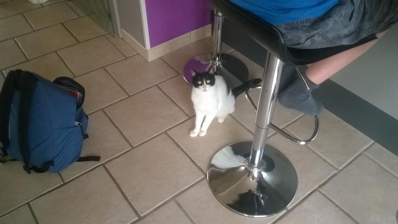 Janice,chaton femelle née le 20 mars adoptée - Page 2 Wp_20113