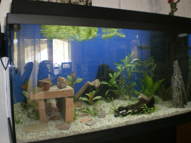 L'aquarium de supma67 P7010010