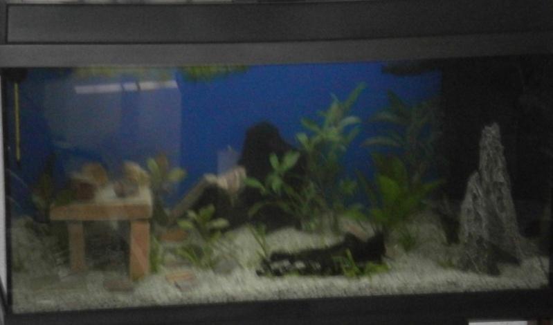 L'aquarium de supma67 P7010011