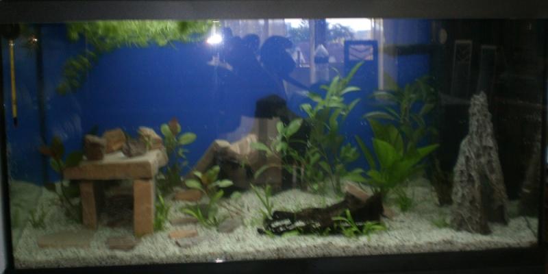 L'aquarium de supma67 P7010012