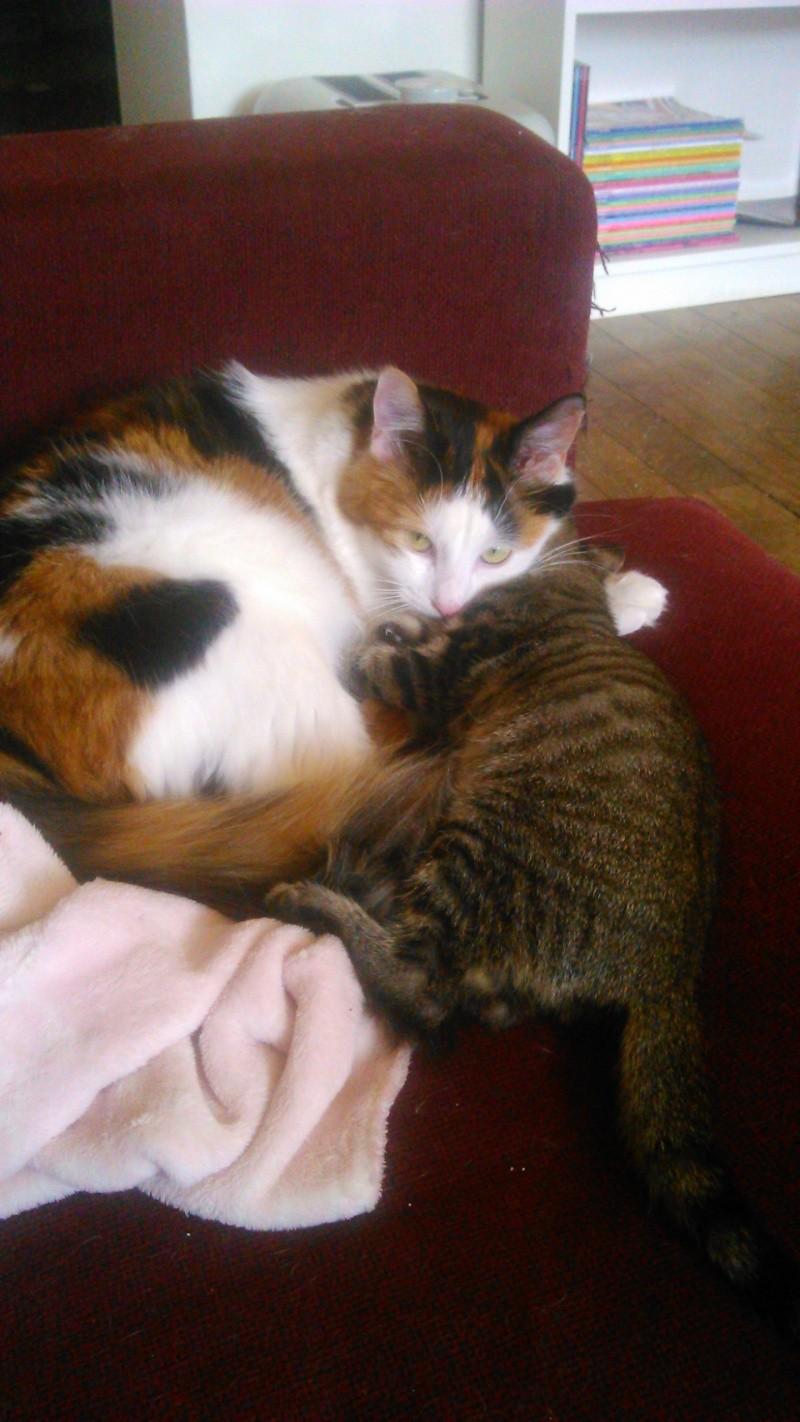 Lilly, femelle type européen tabby née le 25/04/2015 - Page 3 Dsc_0911