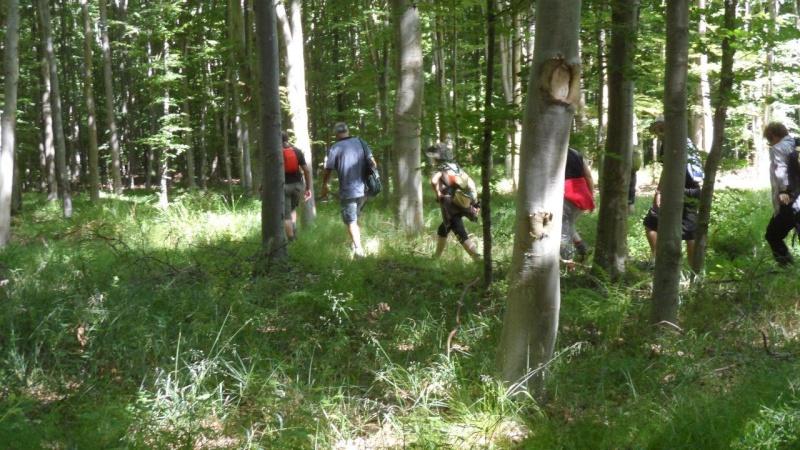 Dimanche 28 juin Lyons-La-Forêt Rando_12