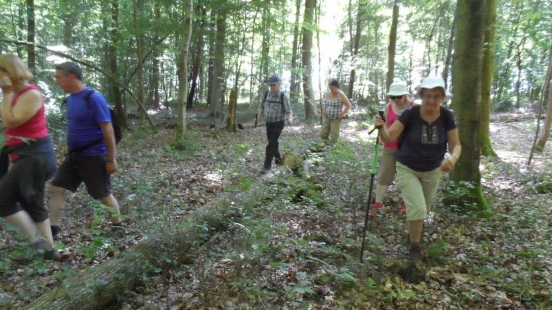 Dimanche 28 juin Lyons-La-Forêt Rando_15