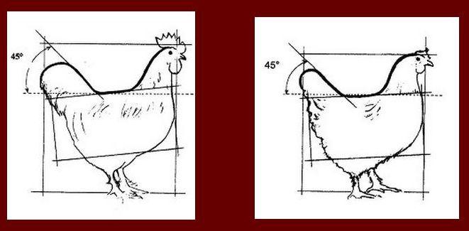 Мараны - порода кур, несущие пасхальные яйца - Страница 11 0176