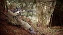 New Group - Vancouver Rifles Regiment: BC 96246410