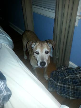 LOST DOGGY - REWARD P610