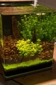 30L Dennerle Aquascaped - Page 2 17082010