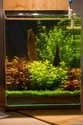 30L Dennerle Aquascaped - Page 2 17082011