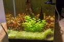 30L Dennerle Aquascaped - Page 2 21052010