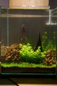 30L Dennerle Aquascaped - Page 2 28062010