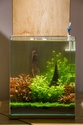 30L Dennerle Aquascaped - Page 2 29072010