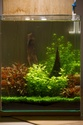 30L Dennerle Aquascaped - Page 2 29072011