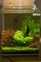 30L Dennerle Aquascaped - Page 2 29072012