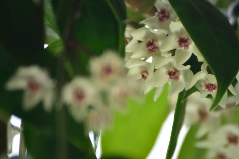 Blüten 2015 - Seite 3 Flo_3810