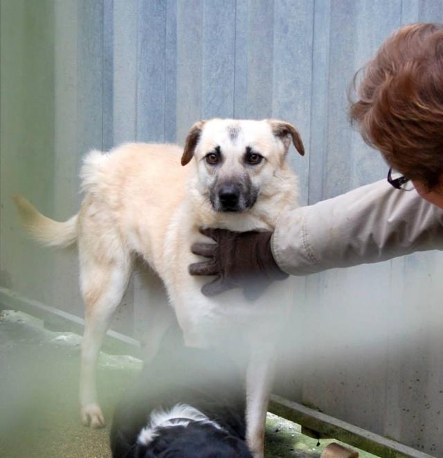 BELLA ChiotF née août 2013 (Anda) Prise en charge Association Rêv'animal Bella10