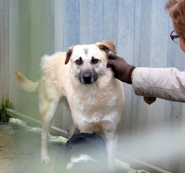 BELLA ChiotF née août 2013 (Anda) Prise en charge Association Rêv'animal Bella110