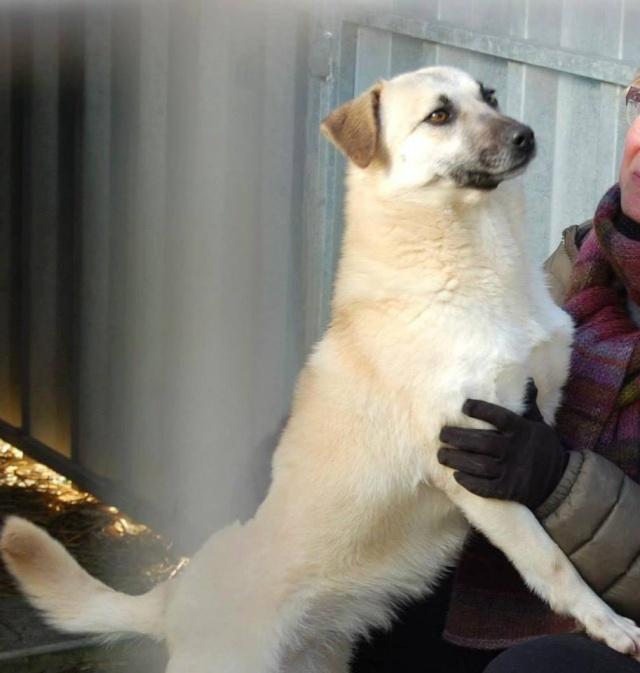 BELLA ChiotF née août 2013 (Anda) Prise en charge Association Rêv'animal Bella210
