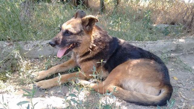 PEEPEE - Née 2004 - 22 kg -mamie très touchante - BELLA/Parrainée/Réservée refuge partenaire asso Mukitza Mama_p10