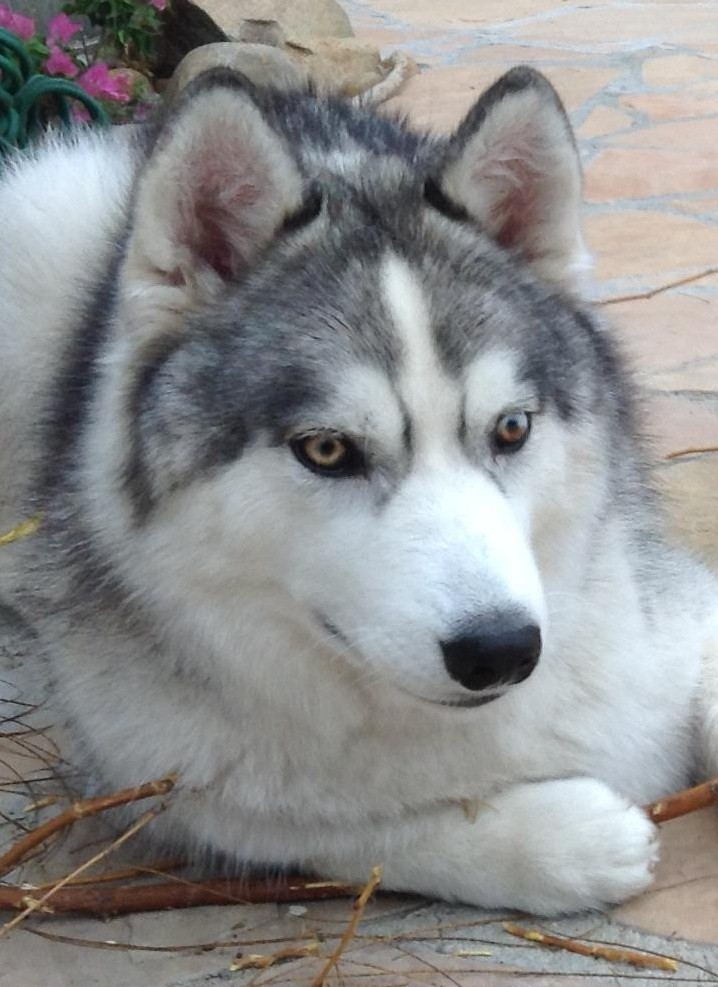 Will my parti-eyed puppy change his eye color? Branch22