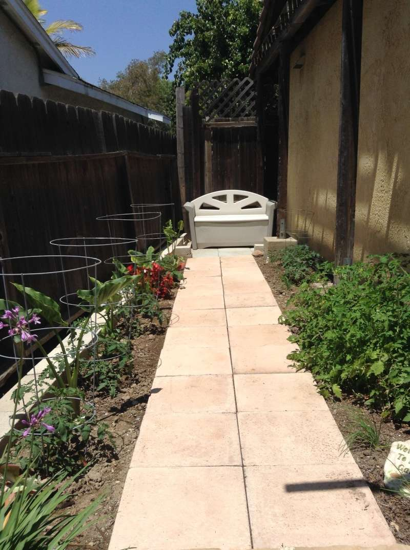 Jimmy's (home of Kohdi and Mishka) Gardening Projects - Page 2 Garden10