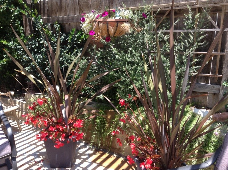 Jimmy's (home of Kohdi and Mishka) Gardening Projects - Page 2 Patio210