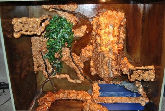 questions sur gecko leopard Dsc_0012