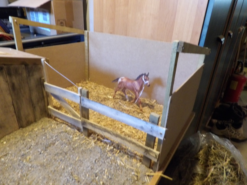 les chevaux de l'écurie Du vieux porche, bienvenue dans ce refuge miniature - Page 4 Imgp0214
